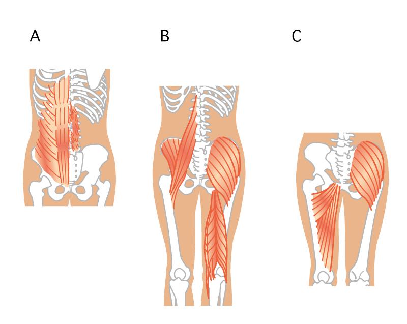 筋肉abc