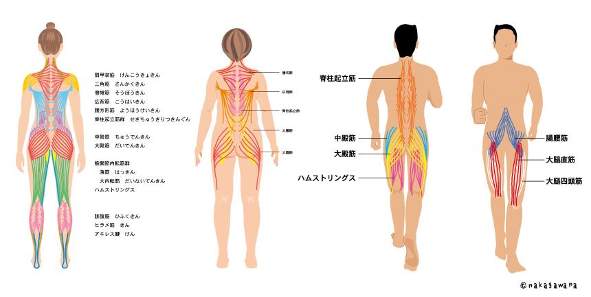 body_base1230